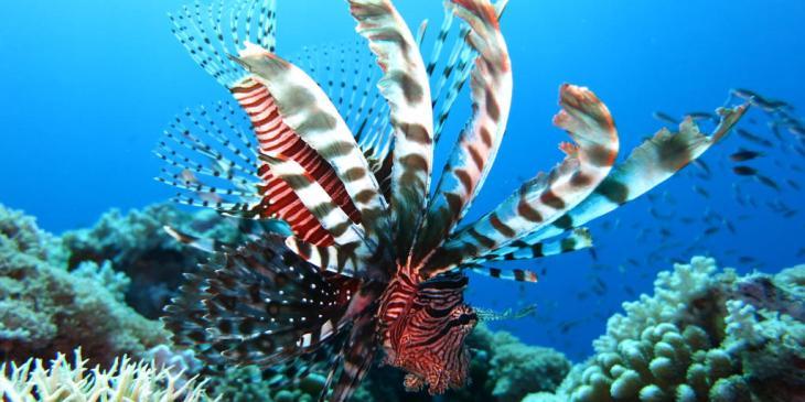 MLE-la-richesse-sous-marine-des-maldives-2_1-1024x512